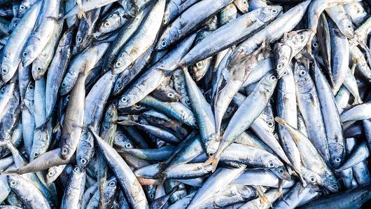 Studimi: Ndryshimet klimatike do ta zvogëlojnë masën e peshqve