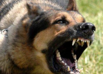 Qeni i fqinjit i kafshon mbesën, djali nga Durrësi merr hak…