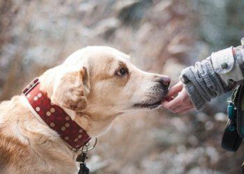 I moshuari ndahet nga jeta, i lë 1 milion euro trashëgimi qenit që i shpëtoi jetën
