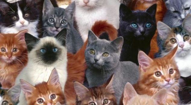 Çfarë ngjyre e keni macen