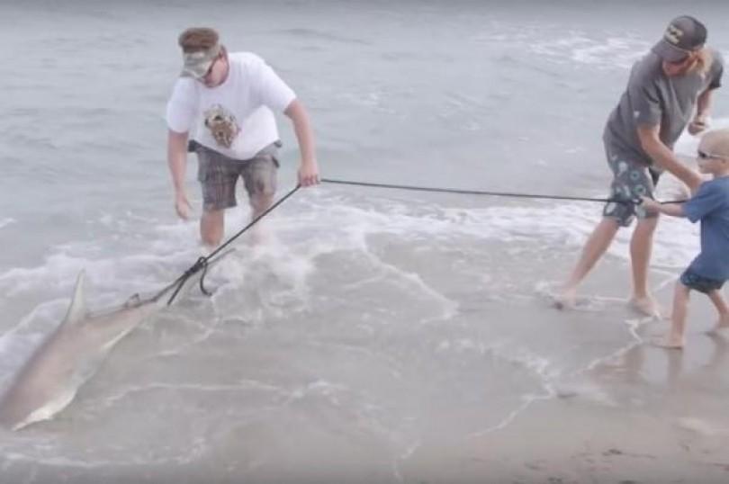 I merr hak peshkaqenit që e kafshoi [Video]