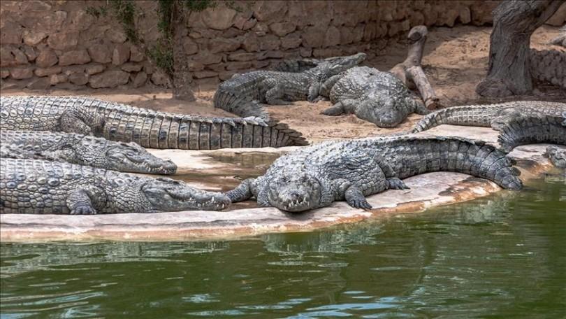 Krokodilët zëvendësojnë gardianët e burgut