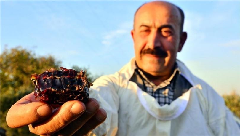 Mjalti i kuq befason bletarët në Turqi