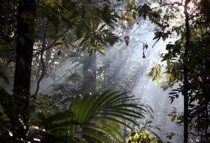Magjia e Amazonës