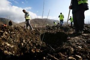 projekti i ripyllëzimit