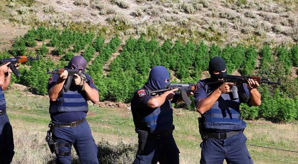 SHBA: Kultivimi i kanabisit në Shqipëri është shtuar