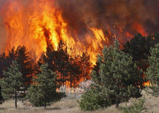Shqiptarët po i djegin vetë pyjet, 90% zjarre të qëllimshme