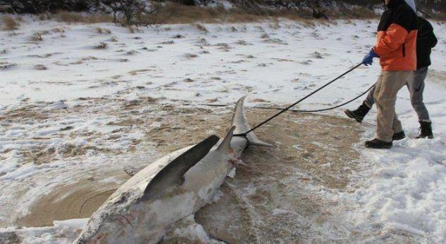 Temperaturat -38 gradë, ngrijnë edhe peshkaqenët
