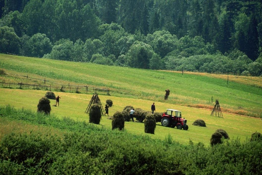 Italia kërkesa për punonjës sezonal, 18 mijë vende në 2018 në bujqësi e turizëm