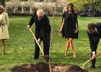 Ku u zhduk pema që mbollën Trump dhe Macron…?