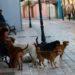"""Masakër me qentë e rrugës në Tiranë, Bashkia ka krijuar një """"Auschwitz"""""""