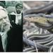 """Beteja virtuale shkon në ekstreme, Rama e Basha përplasen me """"gjyle e gjarpërinj"""" (FOTO)"""