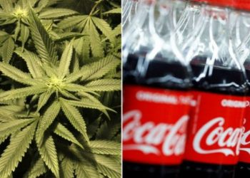 Coca-Cola po studion pijen e re me kanabis