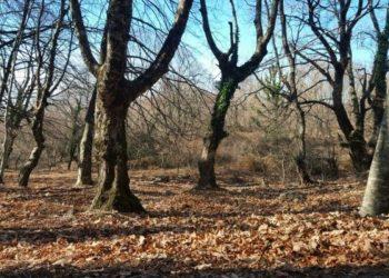 Sinoptikanët: Dimri i këtij viti do të jetë i pazakontë