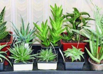 7 bimët që bëjnë mrekulli rreth njeriut, mbajini në dhomë dhe pranë fëmijëve