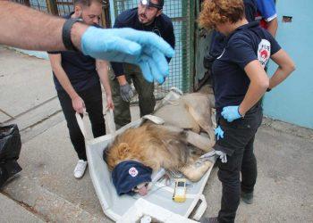 """""""Luani me një sy"""", kafshët e 'Safari Park' në Fier transferohen në Tiranë (FOTO-VIDEO)"""
