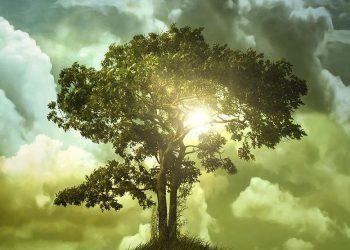 Tregimi mbi burrin që deshte të pret një pemë të cilën njerëzit adhuronin në vend të Zotit