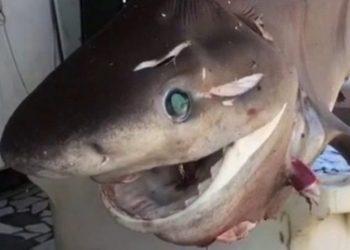 Kapet në Vlorë peshkaqeni 3 metra i gjatë (VIDEO)