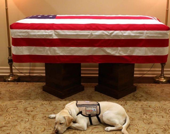 Homazhet për lamtumirën e fundit të ish-presidentit Bush, qeni i tij bën veprimin që po i prek të gjithë (FOTO)
