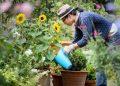 Studimi, kopshtaria, pasioni që do t'ju bëjë të jetoni 100 vjet