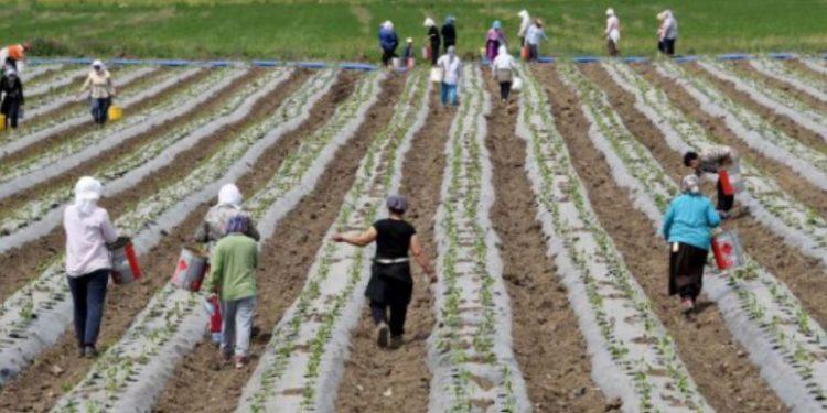 Bujqësia u mbetet grave