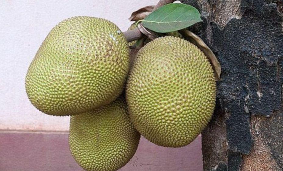Ky është fruti çudibërës që do të shpëtojë botën nga uria
