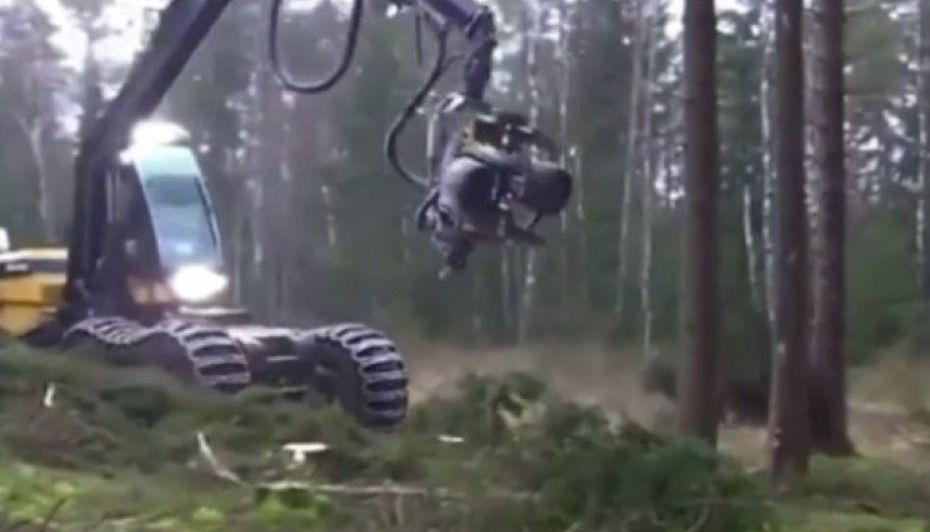 """""""Përbindëshi"""" i pyjeve: Makineria që e pret dhe e copëton lisin në vetëm pak sekonda"""