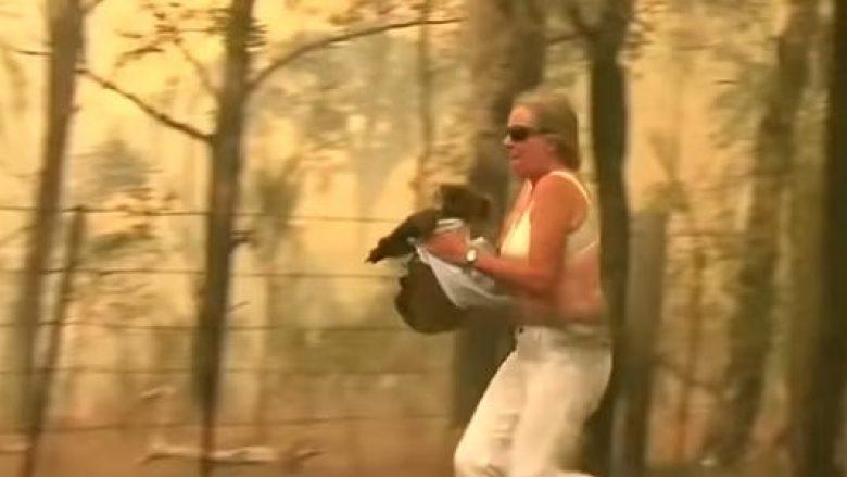 Çfarë guximi! Gruaja rrezikon jetën për të shpëtuar një koala nga zjarret në Australi (VIDEO)