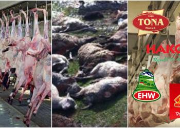 Denoncimi rrëqethës i punonjësit të mishit: ERDA, EHW, TONA, HAKO, ELIDOR lopët e ngordhura i bëjnë sallam