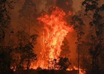 Studiuesit gjejnë shkaktarin e zjarreve në Australi: Qeveria nuk pajtohet