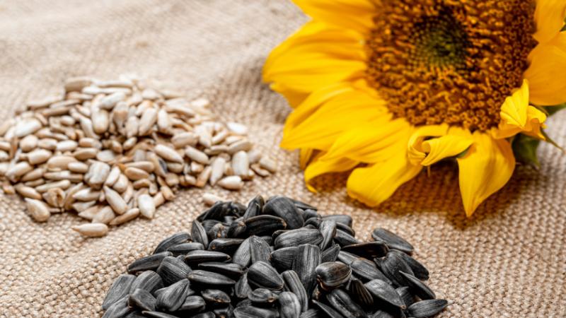 Çfarë të mirash i sjell organizmit ngrënia farave të lulediellit