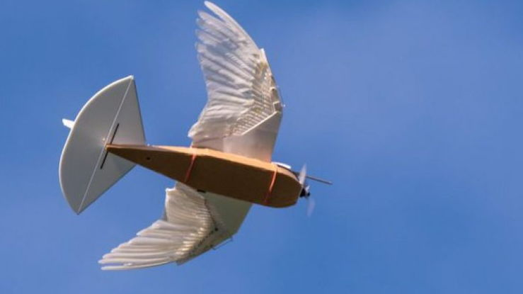 Zogu-robot me pupla të vërteta fluturon me sukses (VIDEO)