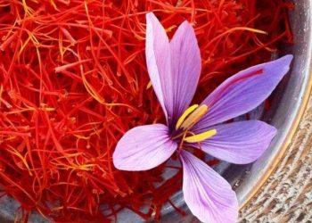 Bima më e shtrenjtë në botë rritet edhe në Shqipëri