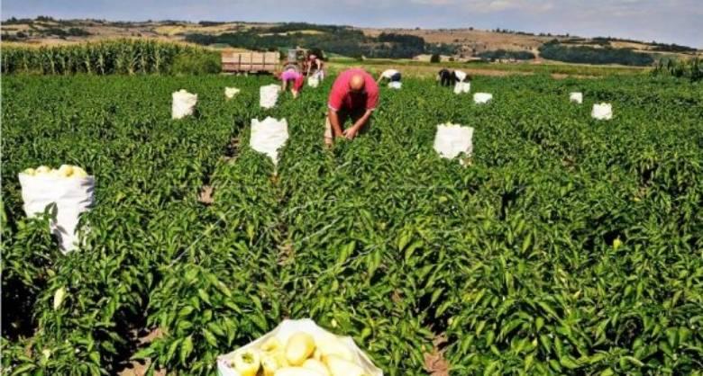 Greqia ligj për punëtorët sezonalë nga Shqipëria si shkak i situatës së krijuar nga Covid-19