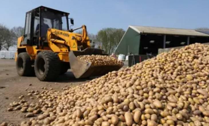 Belgjika u bën thirrje popullatës që të hanë më shumë patate sepse nuk po kanë ku ti shesin