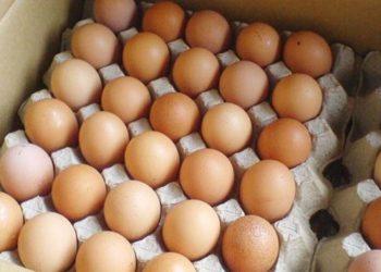 Shoqata e Prodhuesve të Vezëve iu bën apel qytetarëve të kenë kujdes, thotë se në treg ka vezë me sëmundje