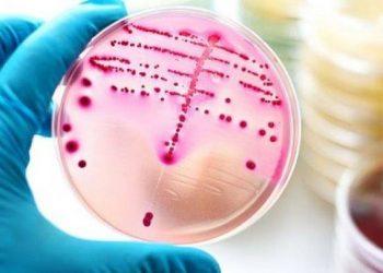 Mirë koronavirusi, por shkencëtarët paralajmërojnë për një tjetër kërcënim