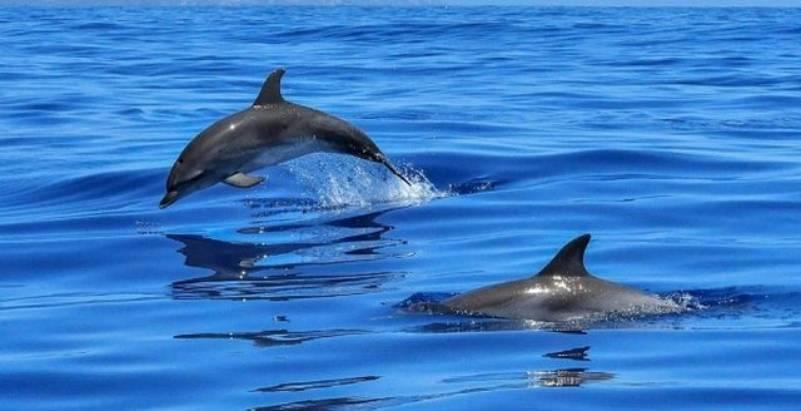 Videoja fantastike nga bregdeti shqiptar, delfinët dhurojnë spektakël në Jalë