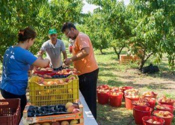 Lajm i mirë edhe për qytetarët shqiptar! Greqia merr vendimin për punëtorët sezonalë